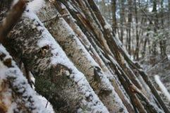 Árboles Nevado imagen de archivo libre de regalías