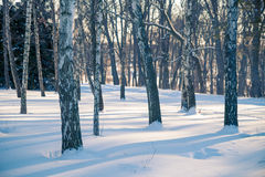 Árboles Nevado en el bosque del invierno Foto de archivo