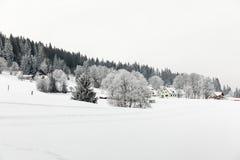 Árboles Nevado en invierno en el bosque negro foto de archivo