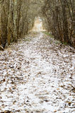 Árboles Nevado en invierno y camino rural Imagen de archivo