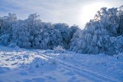 Árboles Nevado en las montañas Fotos de archivo libres de regalías