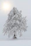 Árboles Nevado en paisaje del invierno Foto de archivo libre de regalías