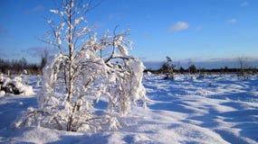 Árboles Nevado, Lituania Foto de archivo