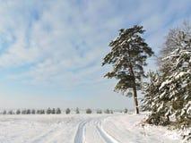 Árboles Nevado, Lituania Fotos de archivo