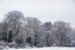 Árboles nevados fotografía de archivo