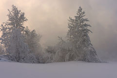 Árboles nevados Imagen de archivo