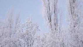 Árboles nevados almacen de metraje de vídeo