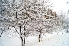 Árboles nevados Foto de archivo