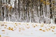 Árboles nevados Imagen de archivo libre de regalías