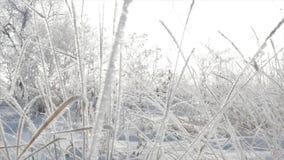 Árboles nevados, cañas secas en la nieve, luz del sol brillante que baja con la nieve, copos de nieve que caen de los árboles metrajes