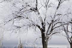 Árboles nevados con la tormenta inminente Foto de archivo libre de regalías