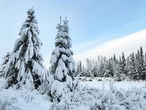 Árboles nevados en Alaska durante invierno Imagen de archivo libre de regalías