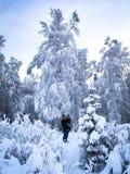 Árboles nevados en Alaska durante invierno Foto de archivo libre de regalías