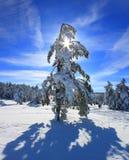 Árboles nevados en el bosque Fotografía de archivo libre de regalías