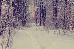 Árboles nevados en el bosque del invierno Fotografía de archivo libre de regalías