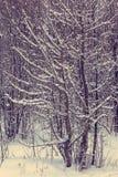 Árboles nevados en el bosque del invierno Fotos de archivo