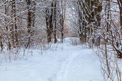 Árboles nevados en el bosque del invierno Fotos de archivo libres de regalías