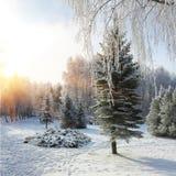 Árboles nevados en el parque de la ciudad Fotos de archivo