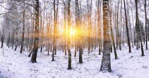 Árboles nevados en el parque de la ciudad Fotografía de archivo libre de regalías