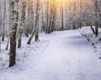 Árboles nevados en el parque de la ciudad Foto de archivo libre de regalías