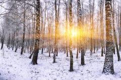 Árboles nevados en el parque de la ciudad Imágenes de archivo libres de regalías