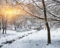 Árboles nevados en el parque de la ciudad Foto de archivo