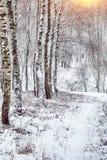 Árboles nevados en el parque de la ciudad Imagen de archivo libre de regalías