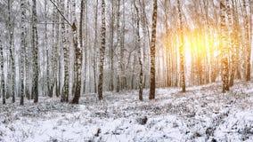 Árboles nevados en el parque de la ciudad Fotos de archivo libres de regalías