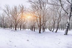 Árboles nevados en el parque de la ciudad Fotografía de archivo