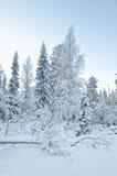 Árboles nevados en el pueblo de Ruka en Finlandia en el polo ártico Foto de archivo libre de regalías