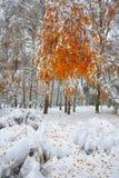 Árboles nevados en la madera Primera nieve en el bosque Fotografía de archivo libre de regalías