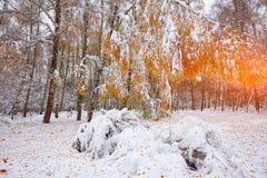 Árboles nevados en la madera Primera nieve en el bosque Fotos de archivo