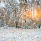 Árboles nevados en la madera Primera nieve en el bosque Fotos de archivo libres de regalías