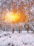 Árboles nevados en la madera Primera nieve en el bosque Imagen de archivo