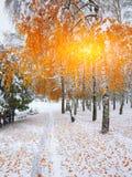 Árboles nevados en la madera Primera nieve en el bosque Imagenes de archivo
