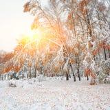 Árboles nevados en la madera Primera nieve en el bosque Fotografía de archivo