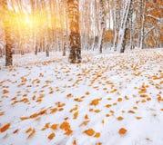 Árboles nevados en la madera Primera nieve en el bosque Imagen de archivo libre de regalías