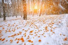 Árboles nevados en la madera Primera nieve en el bosque Foto de archivo