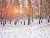 Árboles nevados en la madera Primera nieve en el bosque Foto de archivo libre de regalías