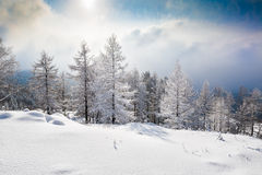 Árboles nevados en las montañas fotografía de archivo