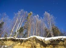 Árboles nevados en un banco escarpado Fotos de archivo