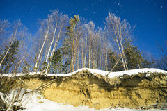 Árboles nevados en un banco escarpado Fotos de archivo libres de regalías