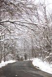 Árboles nevados en un camino Imagen de archivo libre de regalías