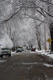 Árboles nevados en un camino del invierno imagen de archivo
