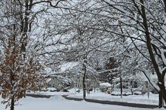 Árboles nevados escénicos Imagen de archivo libre de regalías