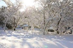Árboles nevados hermosos de la mañana del invierno en el jardín de Nea Erythrea, Atenas, Grecia, 8va de enero de 2019 fotografía de archivo