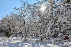 Árboles nevados hermosos de la mañana del invierno en el jardín de Nea Erythrea, Atenas, Grecia, 8va de enero de 2019 imagen de archivo