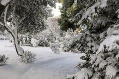 Árboles nevados hermosos de la mañana del invierno en el parque de la ciudad de Atenas, Grecia, 8va de enero de 2019 imagen de archivo