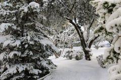 Árboles nevados hermosos de la mañana del invierno en el parque de la ciudad de Atenas, Grecia, 8va de enero de 2019 imágenes de archivo libres de regalías