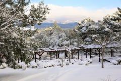 Árboles nevados hermosos de la mañana del invierno en el parque de la ciudad de Atenas, Grecia, 8va de enero de 2019 foto de archivo